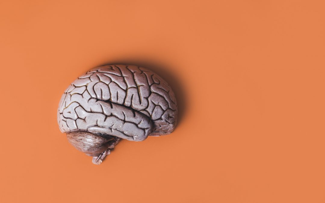 NeuroPlasticity And How To Rewire Your Brain